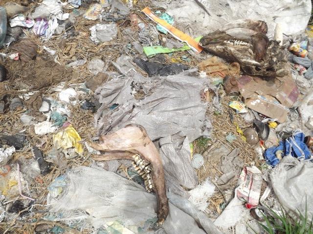 Moradores do bairro Morada Nova reclamam de lixo e até ossos de animais jogados na PI-120