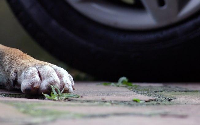 Em Valença (PI); carro da empresa Mega Link atropela e mata cachorro; moradores se revoltam