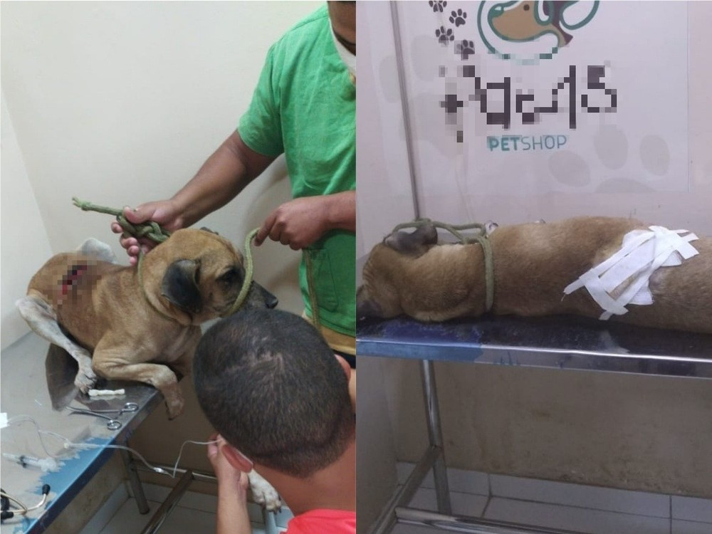 Em Valença (PI); homem é preso suspeito de esfaquear o próprio cachorro